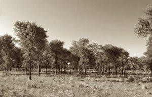 foresta quebracho - storia del tannino
